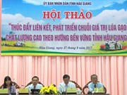 Conference seeks ways to build sustainable rice production chains
