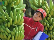 Vietnamese farm produce seeks path to Middle East
