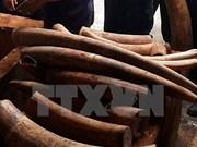 Ivory shipment through Cat Lai port investigated
