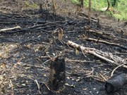Forests destroyed in northern Dien Bien province
