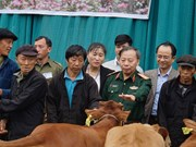 Free breeding cattle given to victims of mines in Ha Giang
