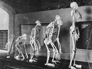Indonesia to set up human evolution research centre