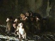 Binh Phuoc local found illegally caging rare animals