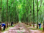Vietnam Rubber Group targets 1.76 billion USD in revenue