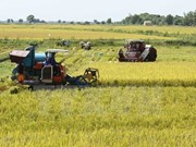 Summer-autumn crop yields 11.5 million tonnes of rice