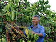 Coffee exports down 23 percent in quantity