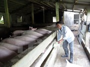 Vietnam seeks to export pork to RoK