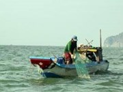 Vietnam seafood mulls action on EU warning