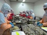 Vietnam able to master parent shrimp production