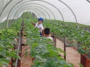 Can Tho, India seek partnership in agriculture, training