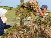 Local agricultural products need more support