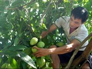 US allows import of VN mangos