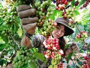 First Vietnamese Coffee Day feted