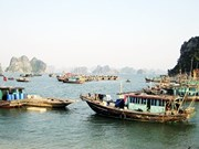 Quang Ninh province loses marine resources