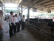 Vietnamese, Japanese firms partner up to produce Wagyu beef