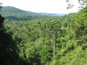 EU finances Cambodia's forest protection project