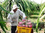 Fruit, veggie exports set record of 3.45 billion USD