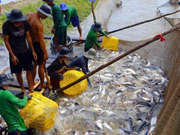 Tra fish prices at highest level in last 20 years