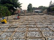 Mekong dried-fish villages prepare for Tet