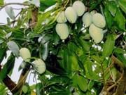 Dong Thap develops mango value chain