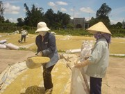 Auspicious start to Vietnamese rice export in 2018