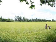 Thua Thien-Hue works hard on new rural development
