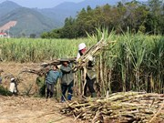 Sugar association looks to Prime Minister for help