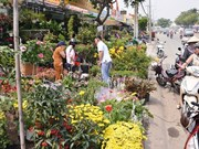 High rentals likely to push up Tet flower prices