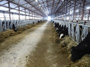 TH Group opens first high-producing dairy farm in Russia