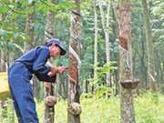 Vietnam Rubber Group eyes higher profits
