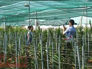 HCM City: Hi-tech methods boost farm produce value