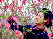 Peach blossom festival in Lang Son