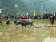 Long Tong, unique farming ritual of the Tay