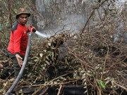 Indonesia declares emergency following forest fire