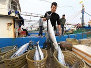 Vietnam works to stop illegal fishing
