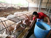 Farmers struggle to treat pig waste