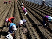 RoK's arable land edges down in 2017