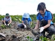 Quang Tri: FSC forest management certification for 22,000 ha of forest