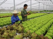 Vietnam exports clean vegetable farming technology to Singapore