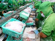 US antidumping duties on VN's frozen fish fillets unfair: Ministry