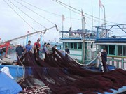 Quang Ngai tightens control of fishing activities to fight IUU