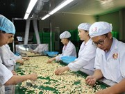 Cashew exports surge in first quarter
