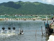 Solutions sought for sustainable fishery in Phu Yen