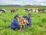 Vinamilk to build four hi-tech dairy farms in Thanh Hoa