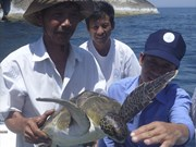 Hatchery project to save sea turtles in Cu Lao Cham