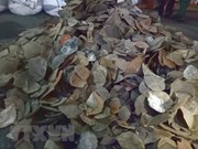 HCM City seizes 3.8 tonnes of pangolin scales
