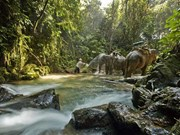 Thailand's national park system starts annual closure of attractions