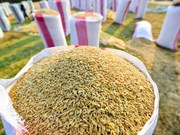 Cambodian rice production up 5.7 percent