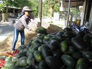 Vietnamese farm produce seeks to reach French customers