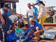 Da Nang increases trace of fishery origins